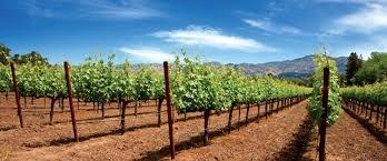 Odobrenje projekta iz mjere ulaganja u vinarije i marketing vina